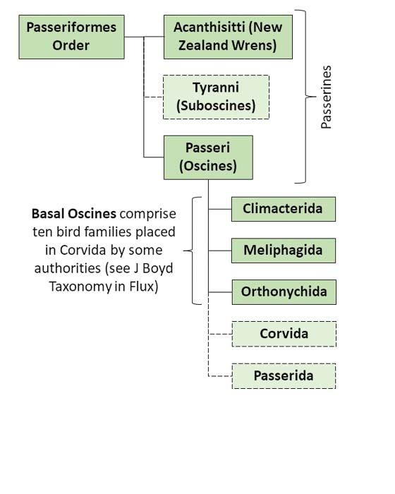 Figure showing Taxonomy Family Tree relevant to Acanthisitti and Basal Oscine Photo Album