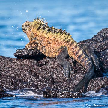 Animals Photo Albums [Reptiles]