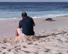 Photographing Hawksbill Turtles at Mahé Islands Anse Bazarca beach