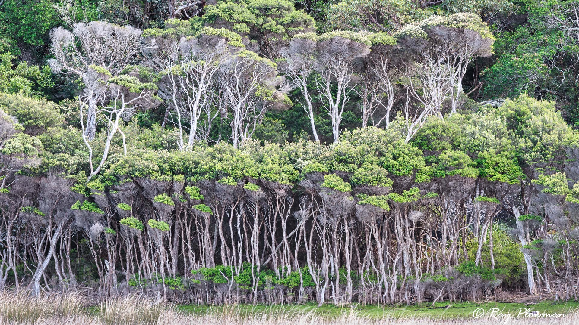 Trees on Tidal Rivers Steep North Bank at Wilsons Promontory National Park