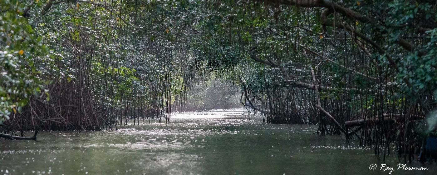 West Coast Mudflats - Caroni Swamp